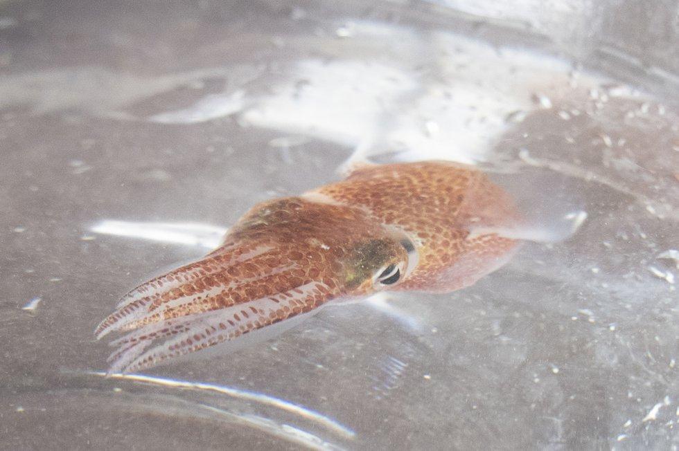 University of Florida professor partners with NASA sending squid into space