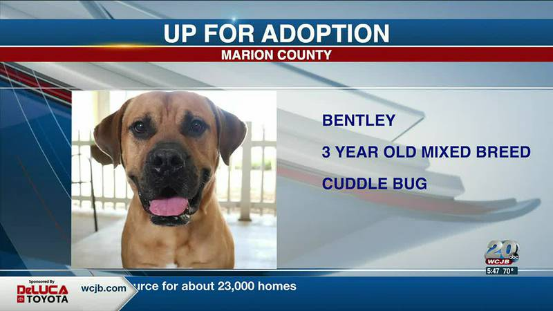 Marion County Pets: Bentley, Coleman, and Sterling