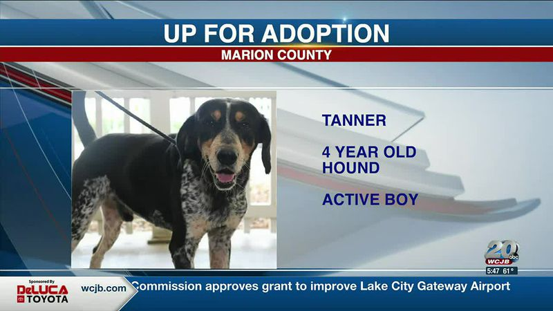 Marion County Pets: Hammy, Tanner, and Olaf