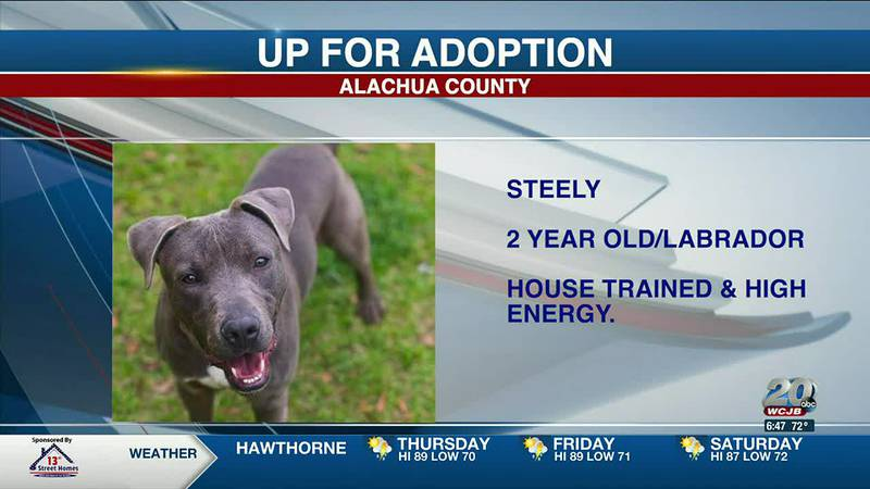 Alachua County Pets: Owlet, Steely, and Emeril