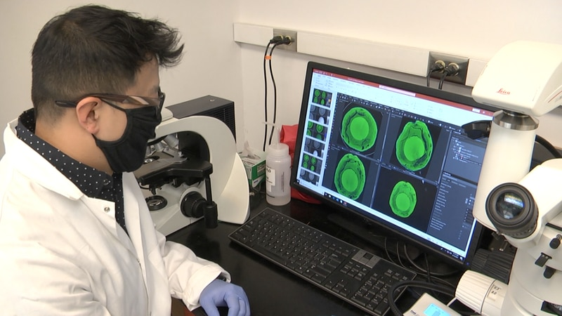 What's Growing On: Scientists developing technology to read produce freshness signals
