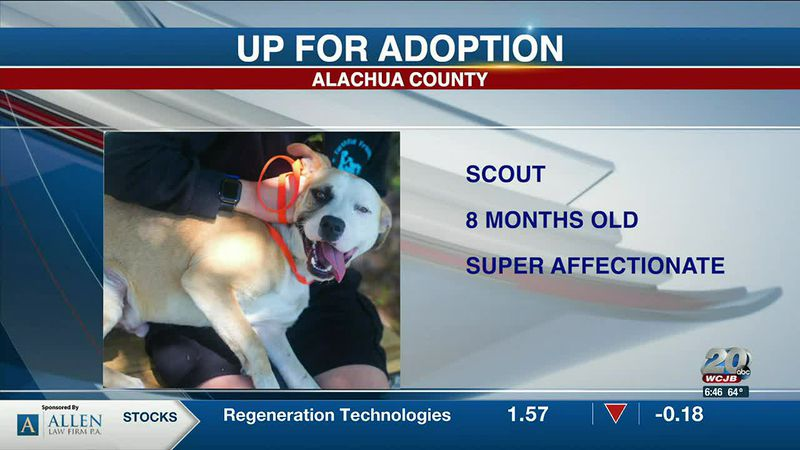 Alachua County Pets: Scout, Fable, and Blitz