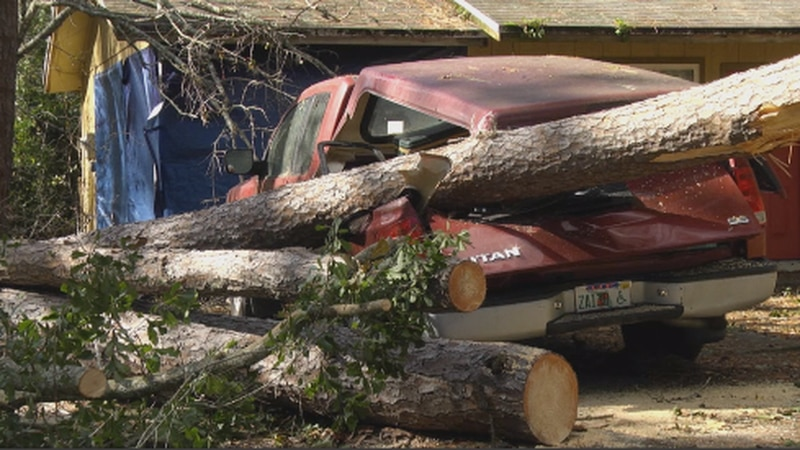 Many trees were down after a severe storm came through Gainesville Monday morning.