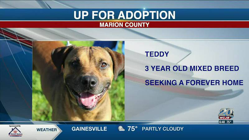Marion County Pets: Alexis, Ellie, and Teddy