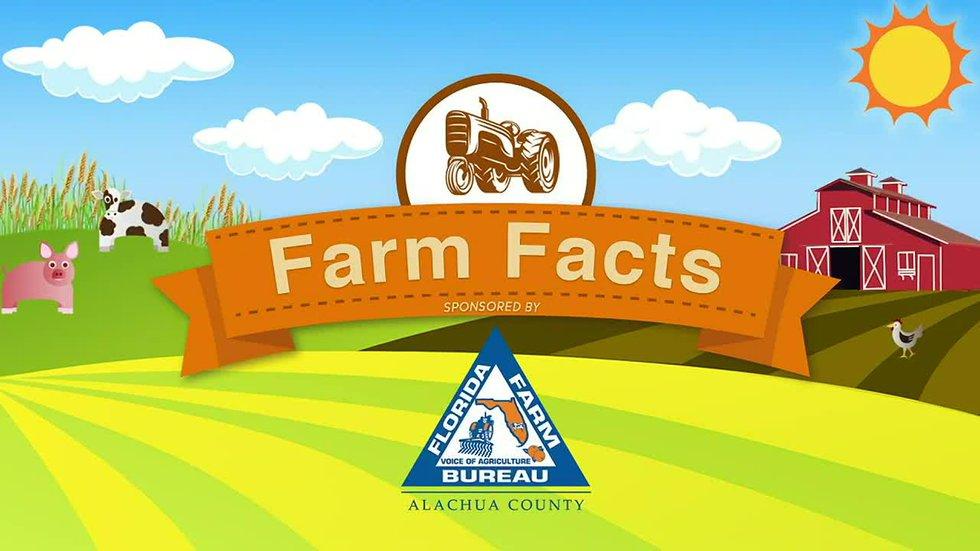 wcjb.com - WCJB Staff - Farm fact: Florida Cracker cattle