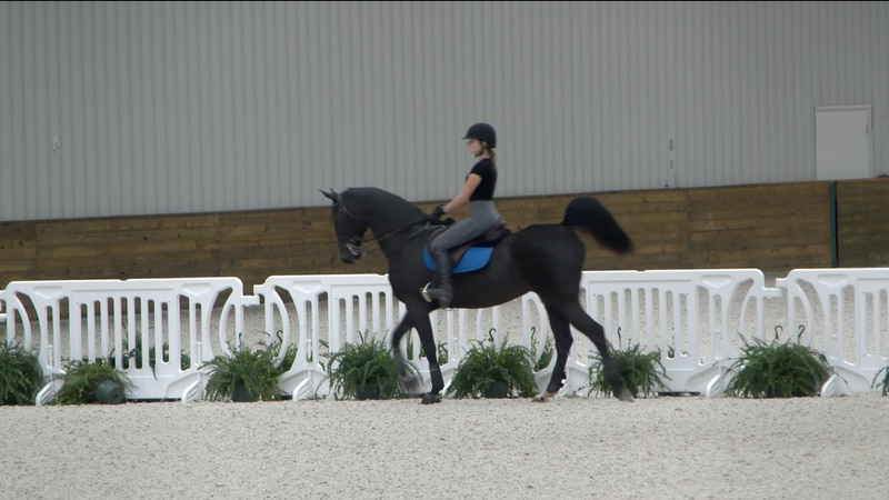 The new Ocala International Horse Show makes it's debut at the World Equestrian Center Tuesday...