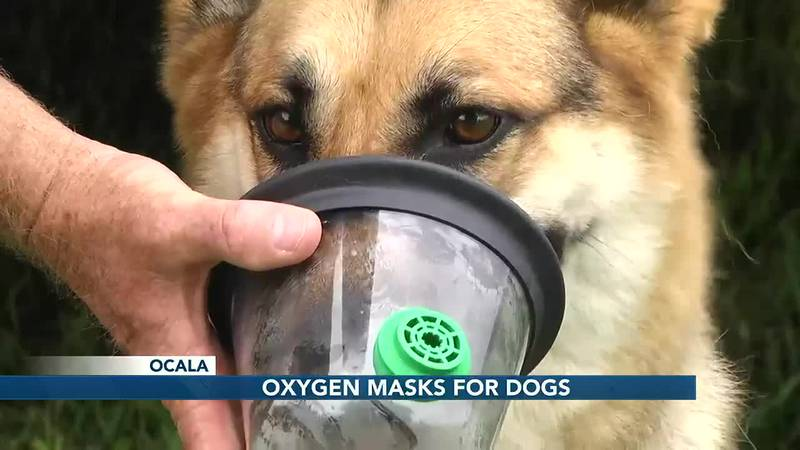 First responders rescue both people and their pets, use special oxygen mask in recovery