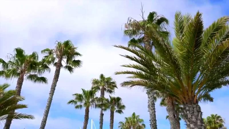 Farm Fact: Palm Trees