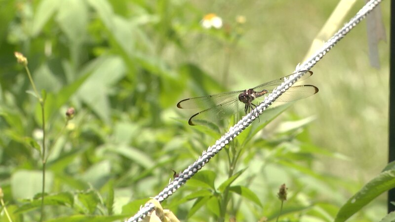 What's Growing On: Helpful insects living in gardens