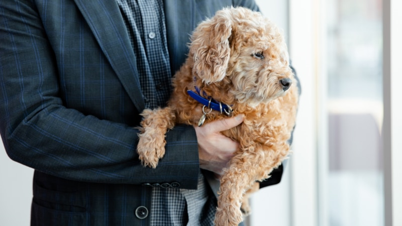Post-pandemic pet anxiety: how to ease and spot signs as you return to work