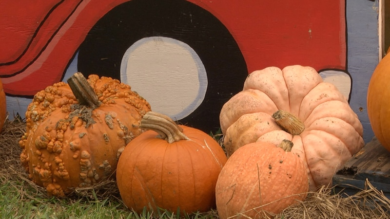 What's Growing On: Some pumpkin patches are giving back this Fall season