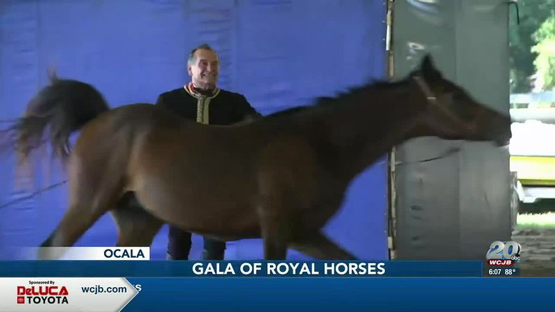 The Gala of Royal Horses had a special mother's Day show at Peninsula Farm in Ocala.