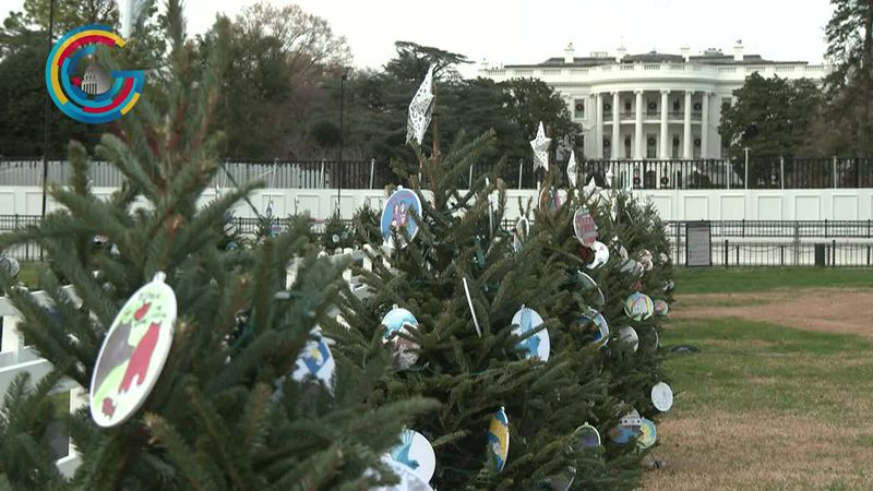 There are 56 trees surrounding the National Christmas Tree in President's Park. (Gray DC)