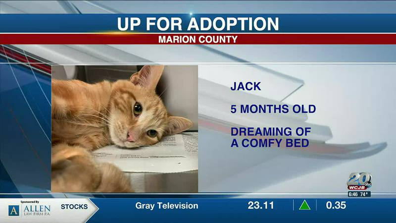Marion County Pets: Jack, Roxy, and Sprint