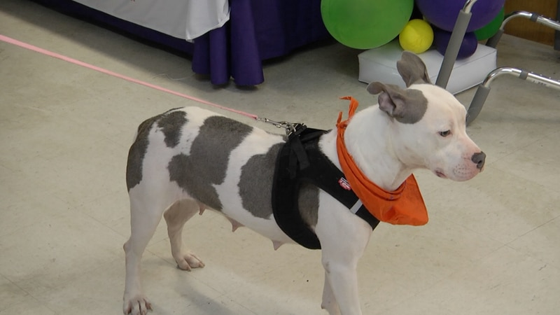 A new thrift shop opened up in Columbia County, and all of the proceeds will benefit animals at...