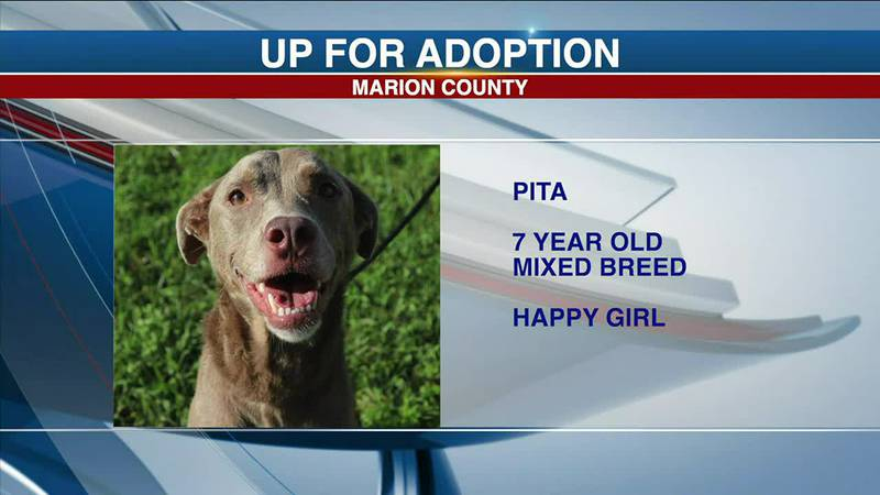 Marion County Pets