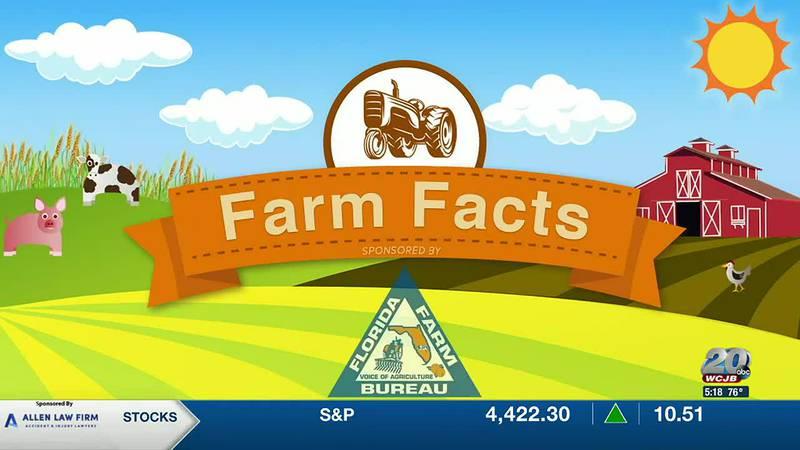 Farm Fact: Cultivating Tomorrow