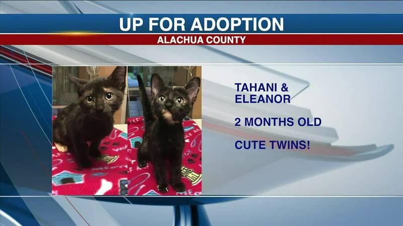 Alachua County Pets: Jazelle, Joe, Tahani, and Eleanor