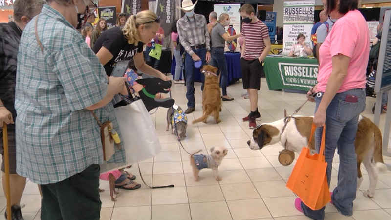 5th annual Pet Expo in Ocala helps puppy find a home