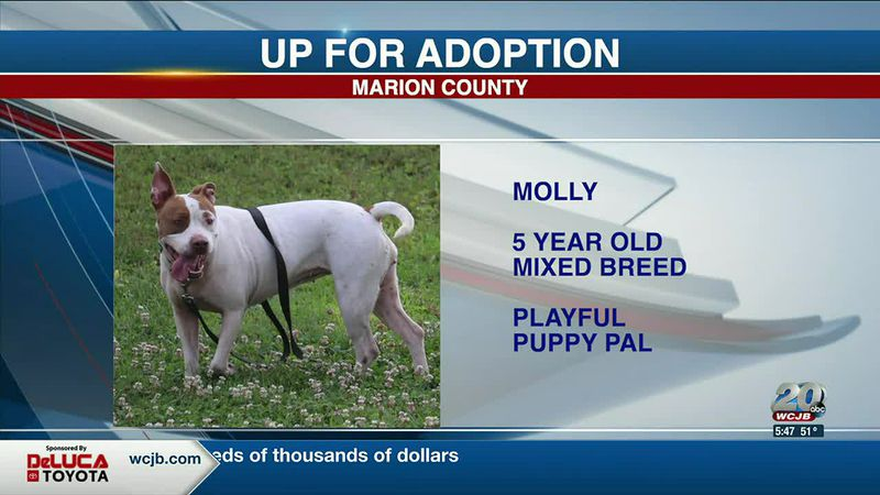 Marion County Pets: Marie, Barb, and Molly