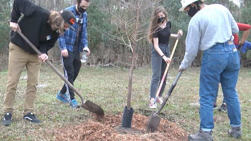 Volunteers including students from the UF joined Alachua County's Park and Conservation Team