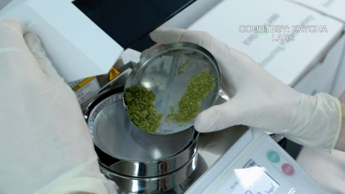 Lab operators conduct tests on Marijuana and Hemp to ensure safety of product.